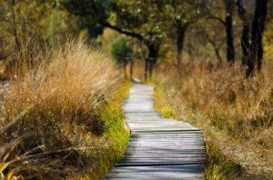 Genesung nach der Diagnose Burnout