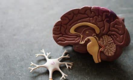 Nervennahrung – Optimale Nahrung für die Nerven